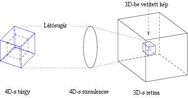 Ábra: hogyan lesz vetítéssel egy 4D-s tárgyból egy 4D-s szem révén egy 3D-s retinán lévő 3D-s kép.